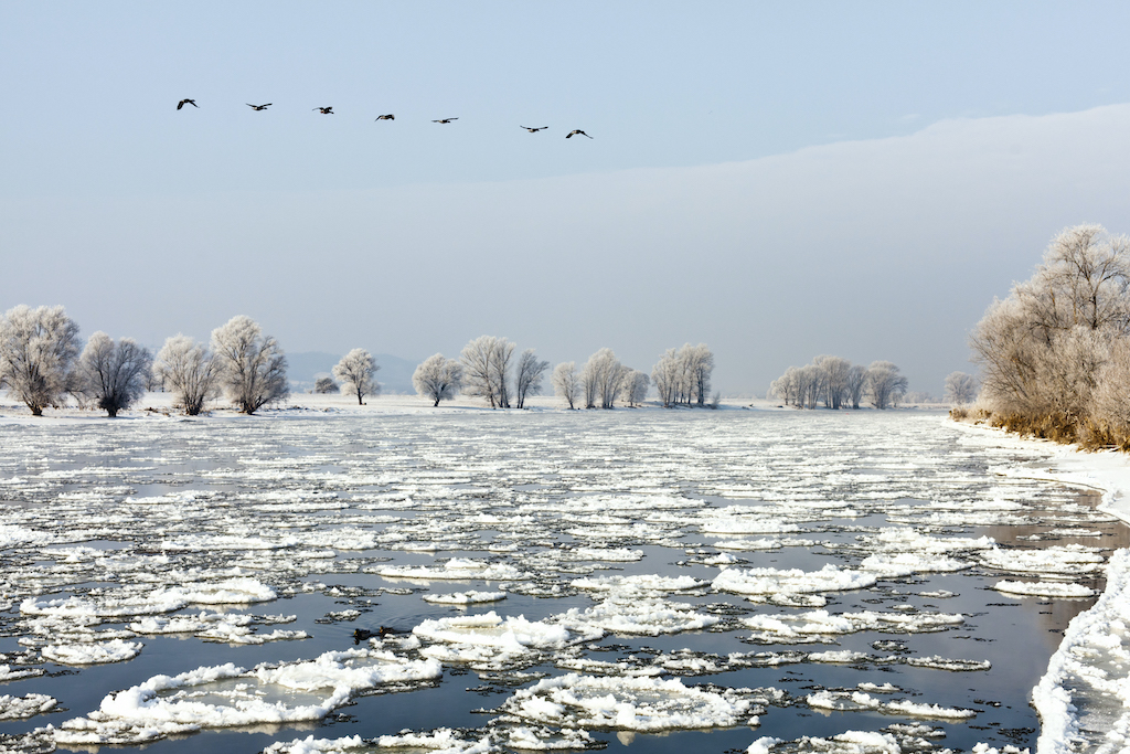 Radebeul Elbe im Winter