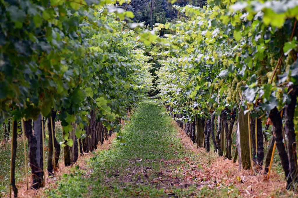 Radebeul Weinhang Reihe