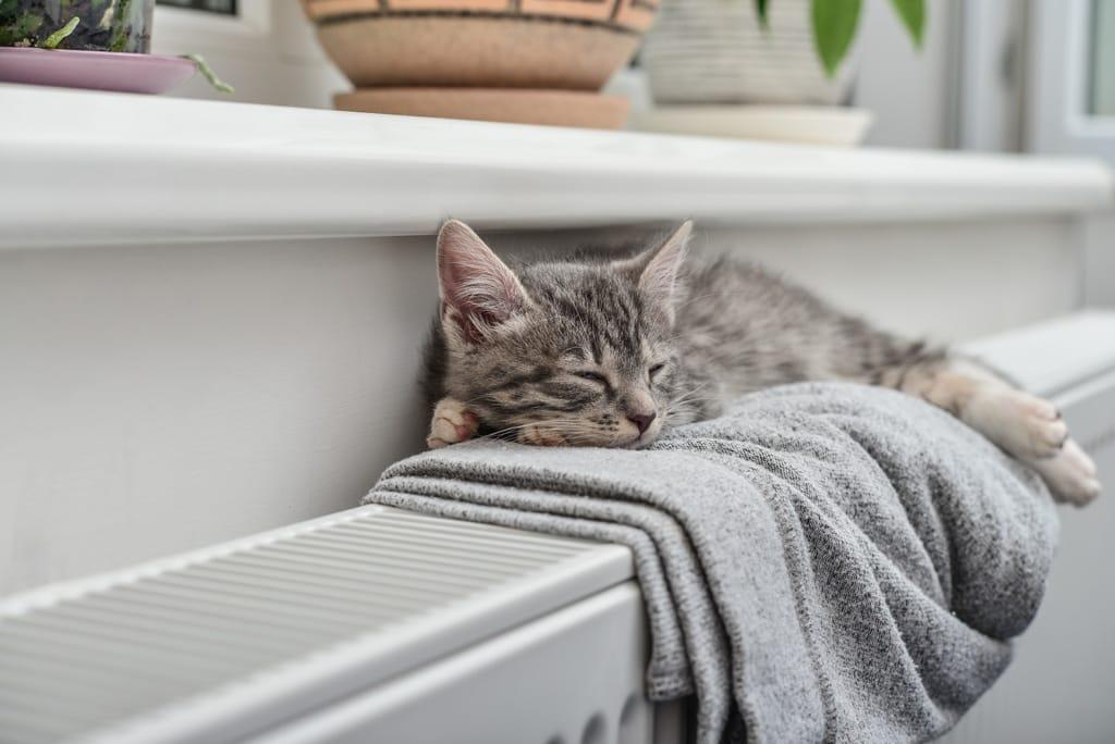 Kätzchen auf Heizung