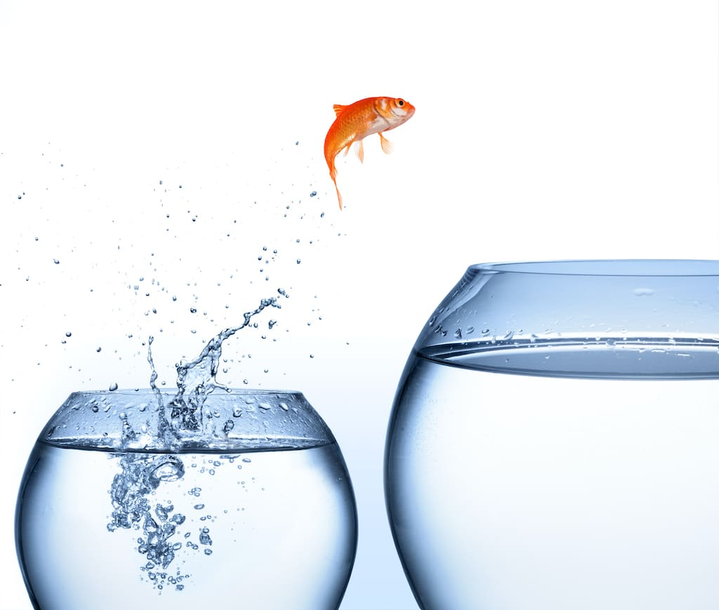 Goldfisch springt aus dem Wasser
